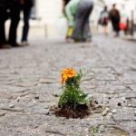 guerilla-gardening-tournesol-paris-1er-mai-pierre-morel11